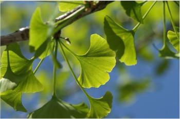 Ferns, Mosses, Ginkgoes= Living Fossils