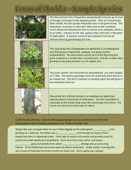 Ferns of Florida