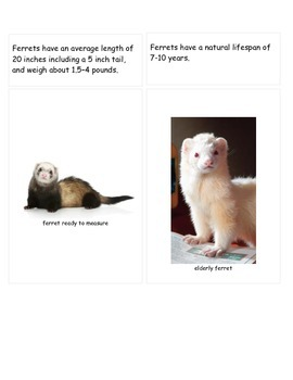 Ferret Information cards and follow-up activities