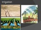 Fertile Crescent PowerPoint