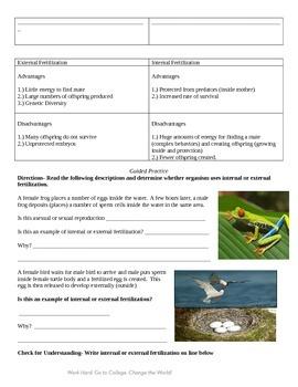 Fertilization (Internal vs. External)