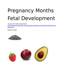 Fetal Development Cards for Review or File Folder Game