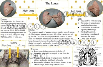 Fetal Pig Dissection Poster Assignment