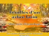 Feuilles d'un arbre latin