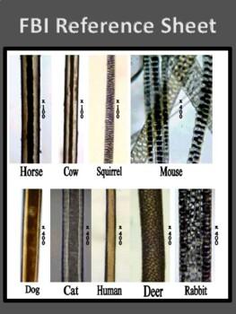 Fiber and Hair Analysis activity