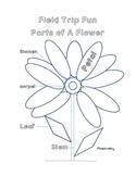 Field Trip Fun - Parts of A Flower