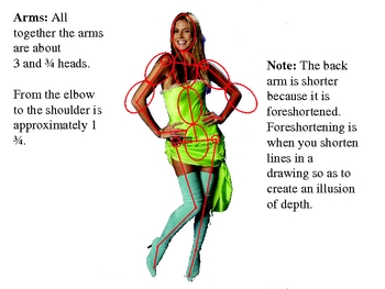 Figure Drawing PowerPoint - Lesson 2 Proportions of the Figure