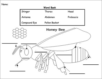 Fill in the blank- Bee Diagram by Jaclyn Daily | TpT