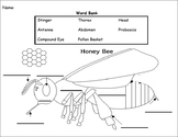 Fill in the blank- Bee Diagram
