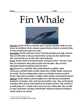Fin Whale - endangered vulnerable lesson facts information review questions