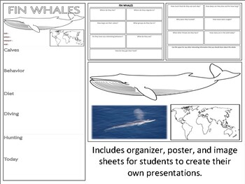 Fin Whales - Mini Unit