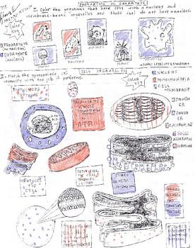Final Review Pg 1: Prokaryote vs Eukaryote & cell organelles Coloring  Sheet/FIB