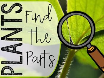 Find-'Em! Plant Parts