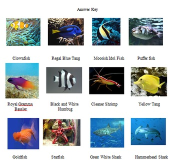 Finding Nemo Character Matching