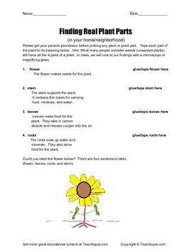 Finding Real Plant Parts  Science with Plants