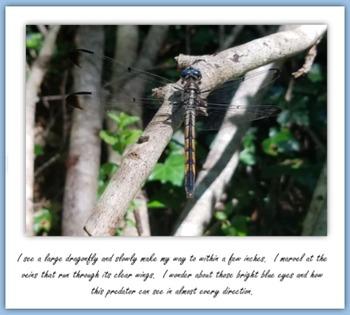 Finding Wildlife at the Chesapeake Arboretum (Non-fiction E-book)
