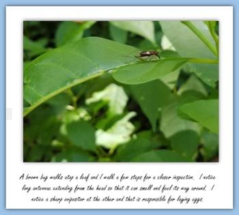 Finding Wildlife at the Chesapeake Arboretum (Non-fiction E-book) - Virginia
