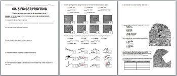 Fingerprint Evidence Review Worksheet Bundle   TpT