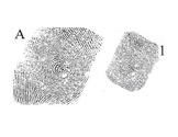 Fingerprint ID - 12 pairs of matching prints, enlarged