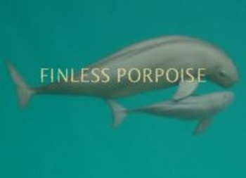 Finless Porpoise - Power Point - Information Facts Pictures