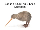 Finscéal Maorach - Conas a Chaill an Cibhí a Sciatháin