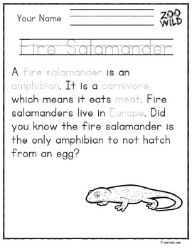 Fire Salamander -- 10 Resources -- Coloring Pages, Reading & Activities