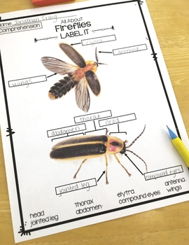 Insects Activity | Fireflies Reading Passages, Vocabulary & Comprehension