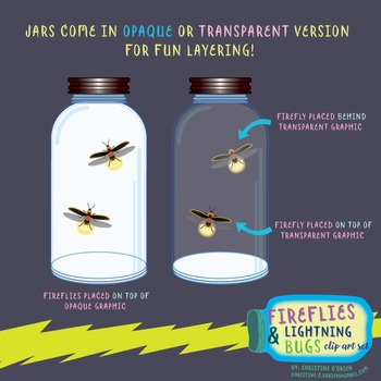 Firefly and Lightning Bugs Life Cycle Clip Art Set