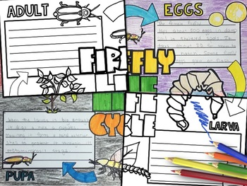 Firefly Activity: Collaborative Research Poster