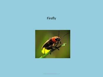 Firefly - Bug Insect Power Point - Information Facts Pictures