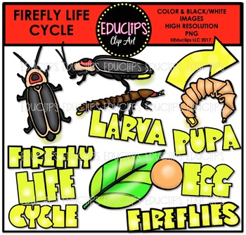 Firefly Life Cycle Clip Art Bundle {Educlips Clipart}
