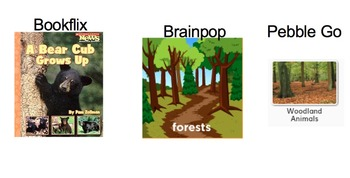 First Grade Common Core Animals and Habitats Domain