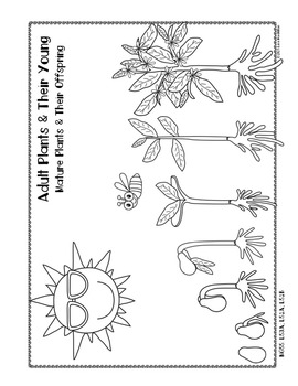 STEM: 1st Grade NGSS Printables with Report of Information: Plants