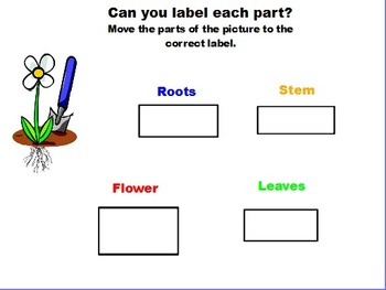 First Grade Plants Flipchart