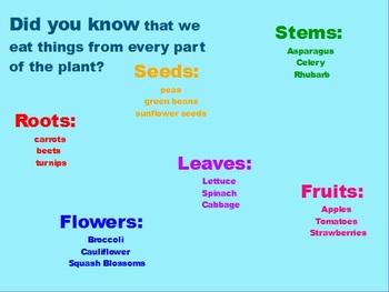 First Grade Plants Flipchart