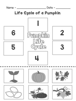 First Grade Pumpkin Unit
