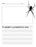 First Grade Spiders Unit Predators and Prey Worksheet