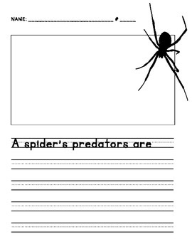 First Grade Spiders Unit Predators and Prey Worksheet