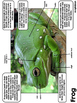Amphibian and Reptile Reports - Second - Fourth