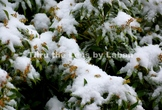 First Snow Stock Photo #256