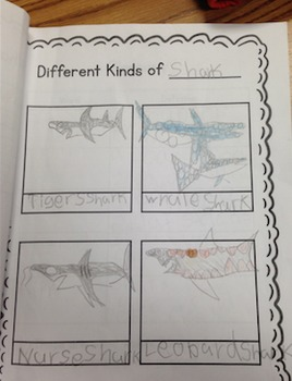 First grade ALL ABOUT animal research book