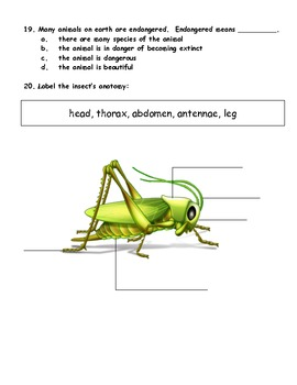 First or Second Grade Animal Classification Test / Assessment
