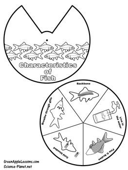 Fish Unit Activity | Characteristics of Fish | Fish Craft