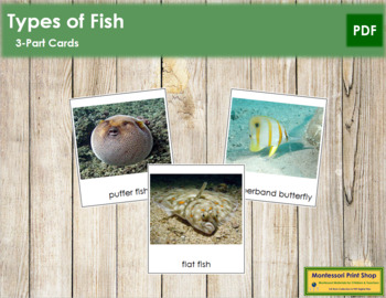 Fish: 3-Part Cards