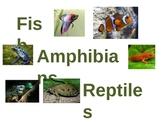 Fish, Amphibians, Reptiles