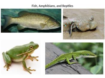 Fish, Amphibians, and Reptiles