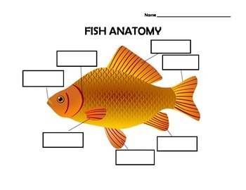 Fish Anatomy Worksheet with Answer Key