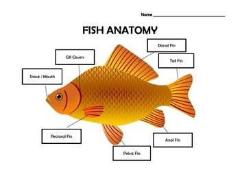 Fish Anatomy Worksheet with Answer Key by Lockwood's ...