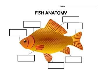 Fish Anatomy Worksheet with Answer Key