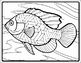 Fish Art - Templates, Reference, and Coloring Sheets